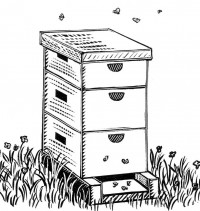 Cover photo for 4-H Grow for It Program: Beekeeping Essay Contest
