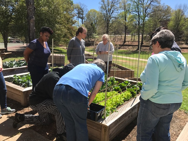 Group of adults looking at raised bed vegetable gardens