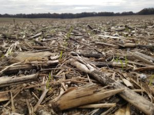 Cover photo for Video: Optimal Wheat Seeding Rates